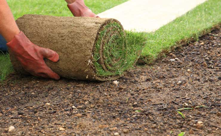 How To Install Roll On Lawn