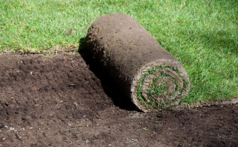 Levelling Lawn With A Lawn Roller – Cape Town